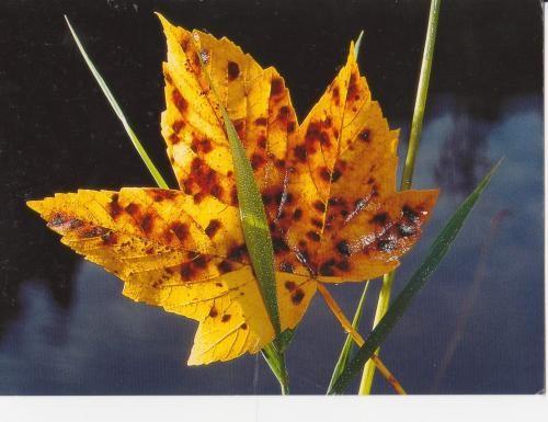 Les feuilles d'automne 186597a7
