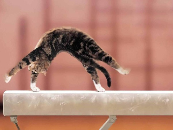 Chat gymnaste