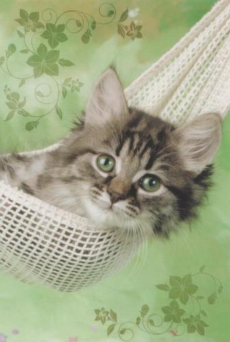 Cool la vie de chat!