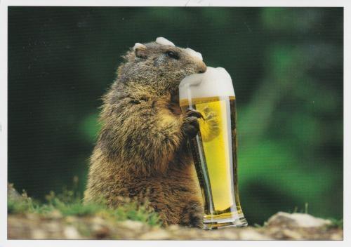 Marmotte qui a soif!!