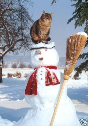 """Résultat de recherche d'images pour """"chat dans la neige"""""""