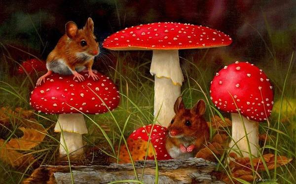 Champignons et souris