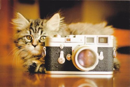 Chat photographe