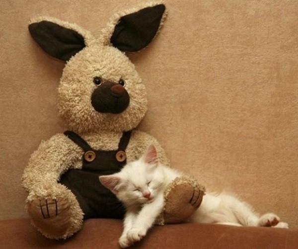Peluche et chat