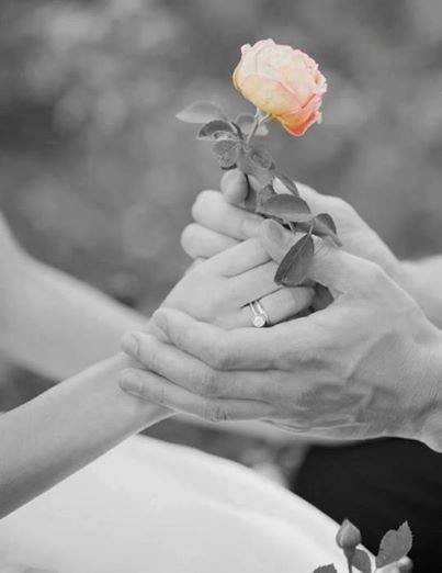 Cette rose POUR VOUS