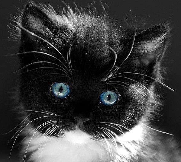 Image du Blog iris111.centerblog.net